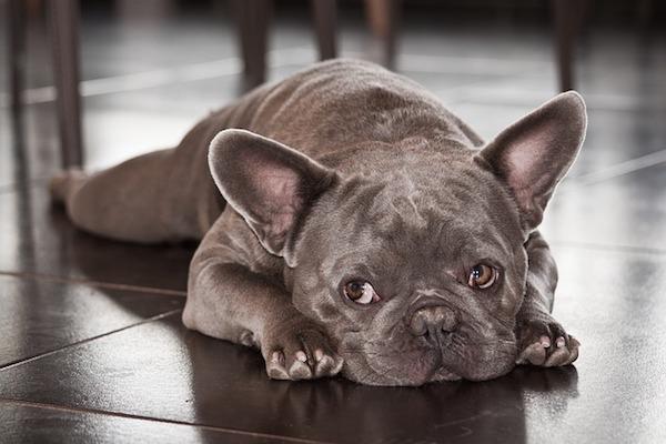 Cane troppo buono: 4 segnali e come aiutarlo