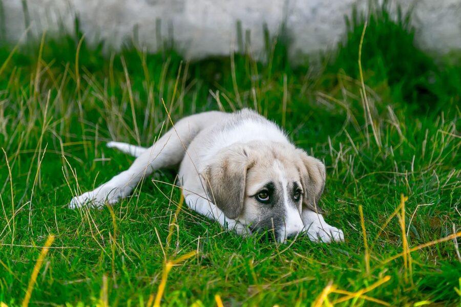 Cose che danno fastidio ai cani, 12 da non fare