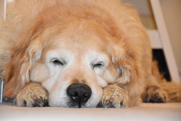 Cucciolo di cane che dorme sempre, è normale oppure no?