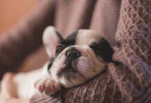 cucciolo di cane solo a casa