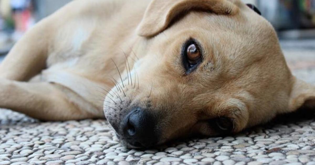 cucciolo di cane che vomita