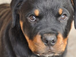 cucciolo di cane seccato