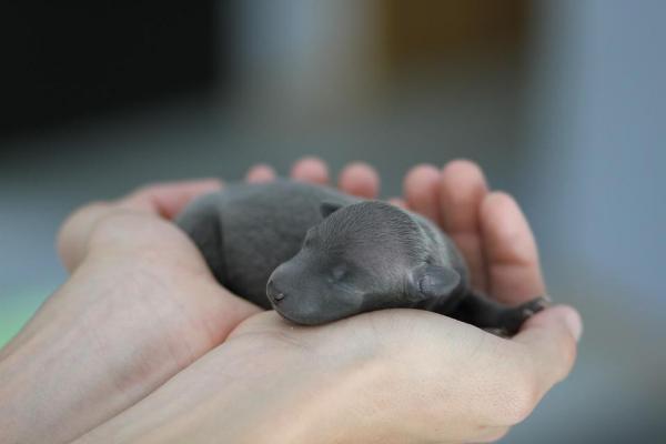cucciolo in mano