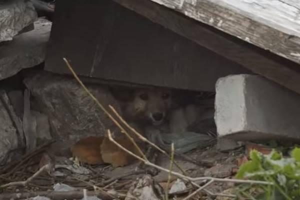 cane intrappolato sotto le macerie