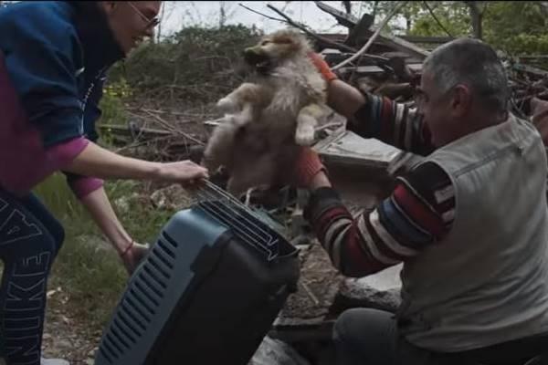 cucciolo viene salvato dai volontari