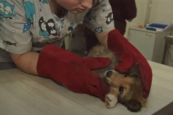 portare il cucciolo dal veterinario
