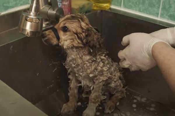 cane fa il suo primo bagnetto