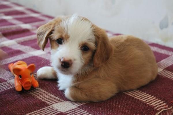 Cucciolo di cane non apre gli occhi: quali sono le cause e cosa fare