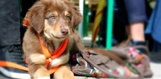 cucciolo di cane in gita