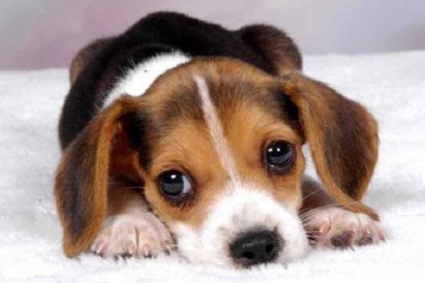 Cucciolo di cane, quando può iniziare a passeggiare? Cosa sapere