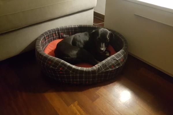 Cucciolo di cane timido, come aiutarlo e farlo diventare più sicuro