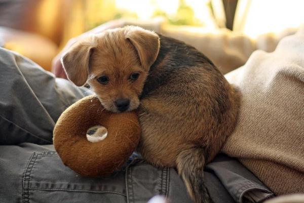 Cucciolo di cane, come farlo ambientare velocemente e senza danni