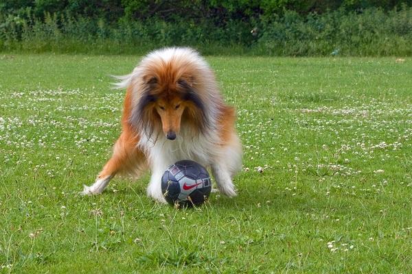 Cucciolo di cane, come farlo divertire e tenerlo sempre impegnato
