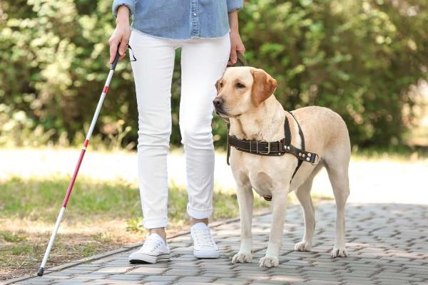 cane che passeggia