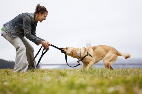 cane che gioca con il proprietario