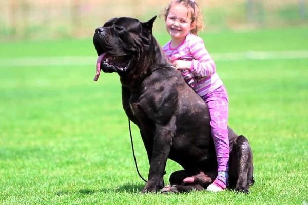 un cane con una bambina