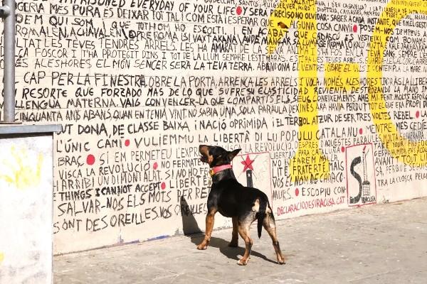 Il cane mangia il muro: tutti i possibili motivi