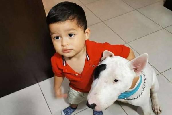 cane con bambino