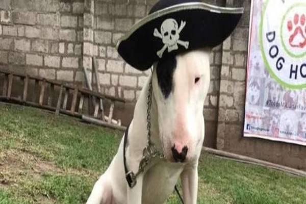 cane con un cappello in testa