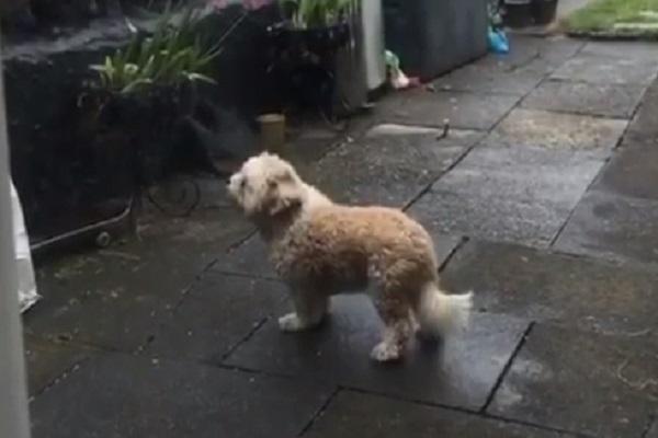 Cagnolino esce ogni giorno in cortile per incontrare il suo amico anziano