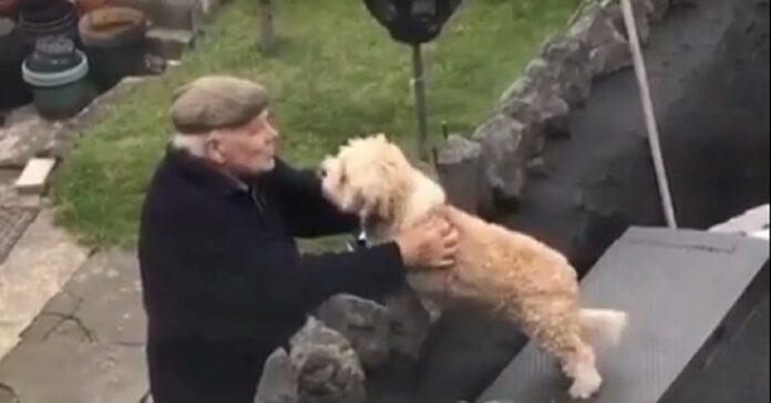 cagnolino cortile anziano