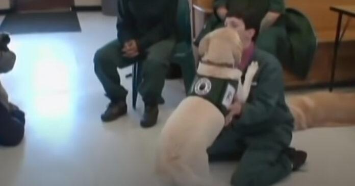 Cane abbraccia proprietario