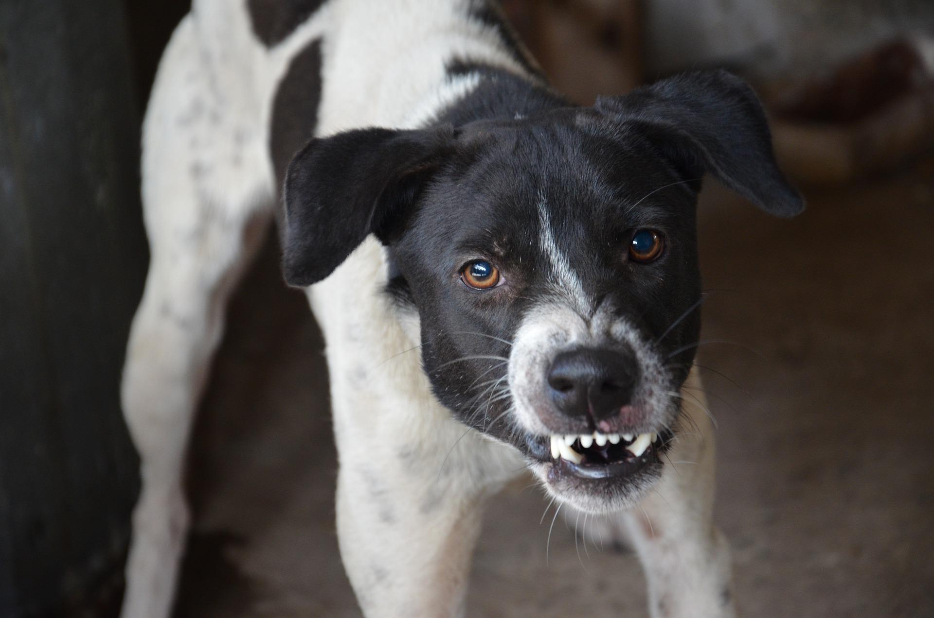 Cane diventato aggressivo: cos'è successo e perché