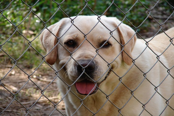 Cani, dove adottarli nel Lazio: piccola guida