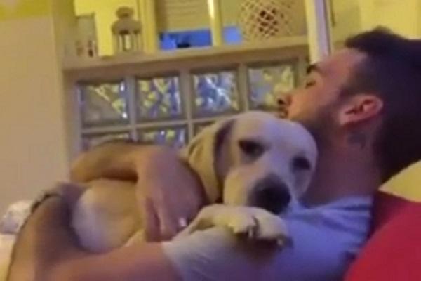 Cucciolo combina un guaio e chiede scusa al suo padroncino (video)