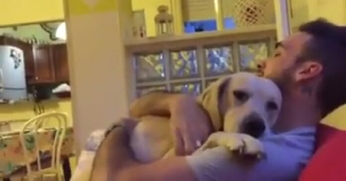 cucciolo scusa padroncino video