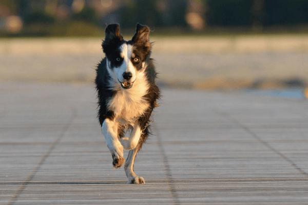 cane che corre su marciapiede