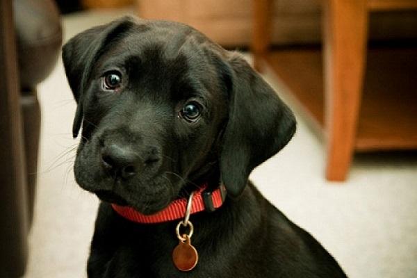 cane e medaglietta