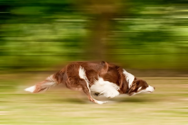 cane che corre all'impazzata