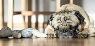 cane che sogna
