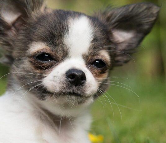 cane con occhi semi chiusi