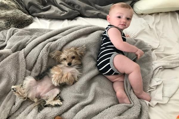 Evie, il cagnolino che sta crescendo insieme al neonato della famiglia che lo ha adottato (VIDEO)