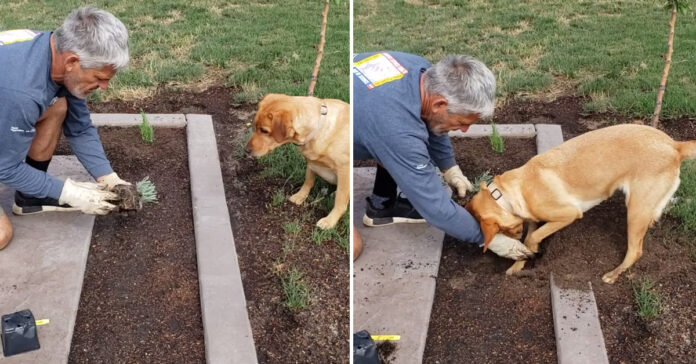 Cane che fa giardinaggio