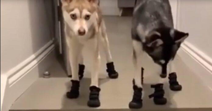 husky scarpe video