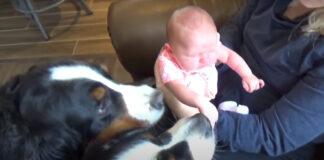 Due cani con un bambino