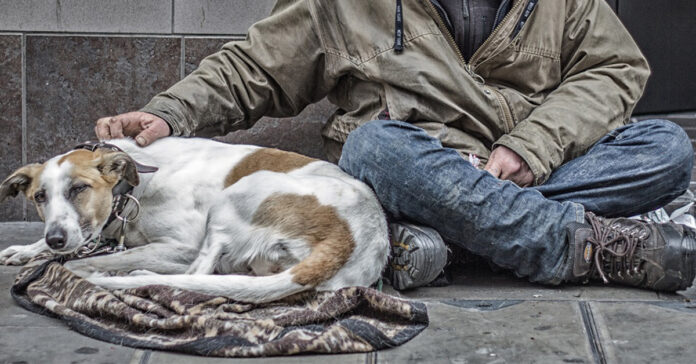 Cane con un senzatetto