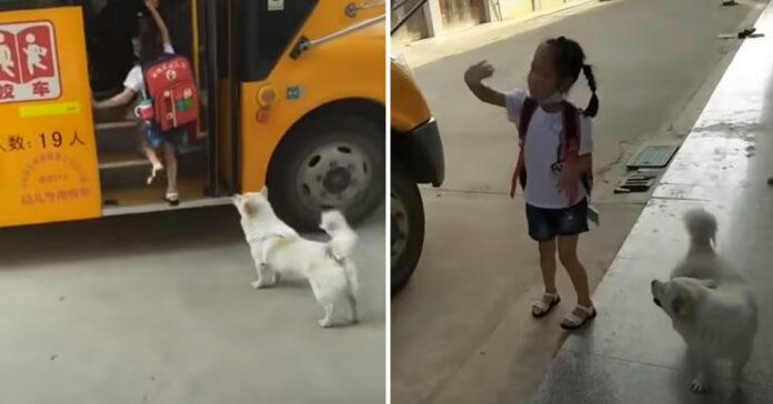 Cagnolino davanti ad un autobus