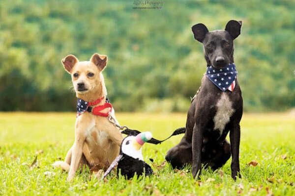 Il salvataggio di Patty e Pepper, due cagnolini che vivevano per la strada