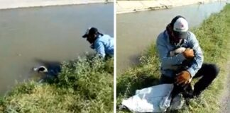 cane salvato in un canale