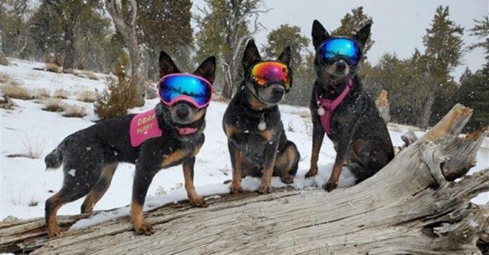 cani in escursione