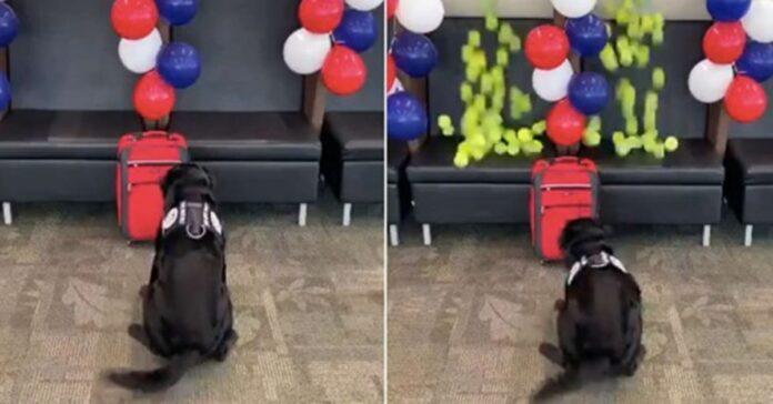 cane davanti una valigia