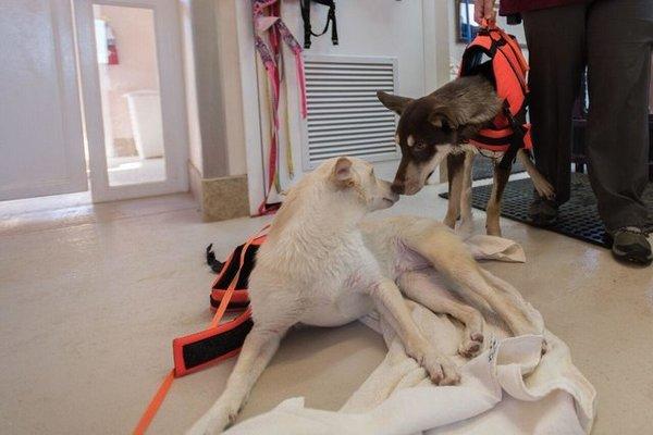 La storia del legame speciale fra i due cagnolini Kit e Caboodle