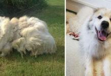 Trasformazione di un cane