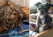 Trasformazione di un cane dopo toilette
