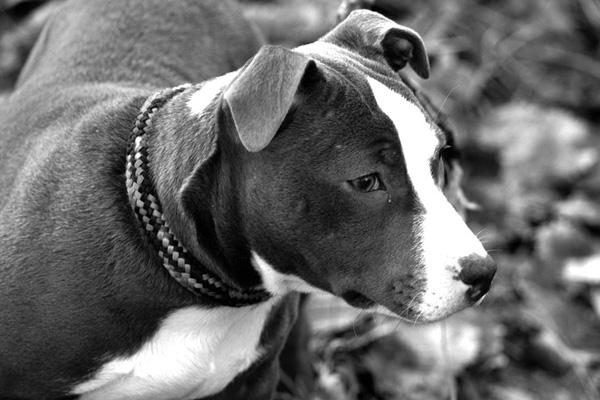 Manuelita, la cagnolina che dopo molte sofferenze ha finalmente conosciuto l'amore