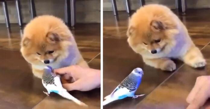 Cane incontra un pappagallo